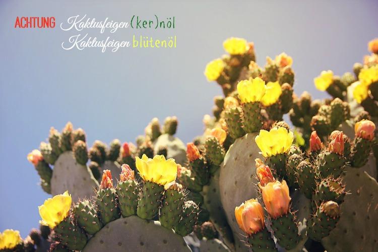 kaktusfeigenkernoel gegen falten augenringe